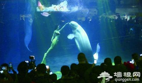2015北京海洋馆圣诞嘉年华 海洋里过一个幸福浪漫的圣诞节