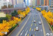 上海现银杏金光大道绵延5公里