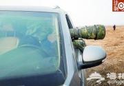 摄影者聚集驱车追拍飞鸟 猛禽被活活累死