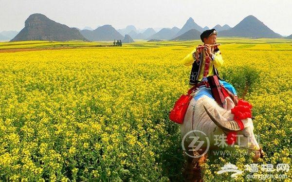 2016年第18届罗平国际油菜花文化旅游节将于2月举办
