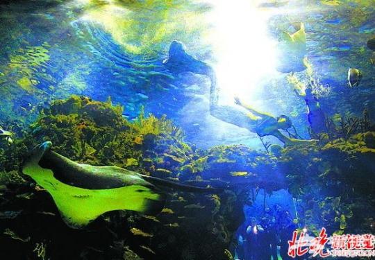 北京海洋馆美人鱼大使招募活动落幕 将环保理念传递更多人