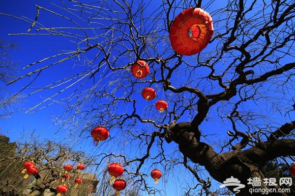 跨年巨献 北京元旦跨年活动超全版[墙根网]