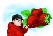 京产草莓一月中旬成熟 将大规模面市