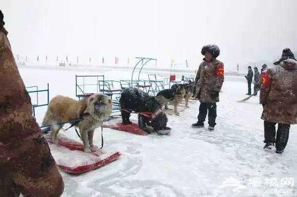一场由北京工体冰雪嘉年华引发的呼吁,让人痛心![墙根网]