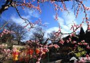 2016年春节必去地 第二十二届红螺寺庙会过年的灯笼挂起来