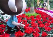 2016上海植物园年宵花展