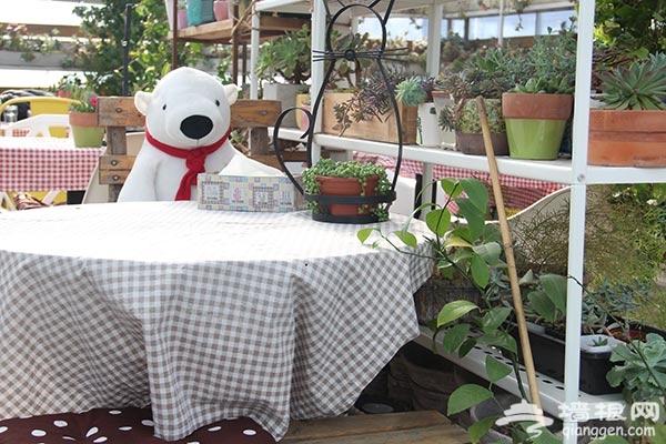 小时光多肉植物主题咖啡馆 内有萌宠的多肉咖啡馆[墙根网]