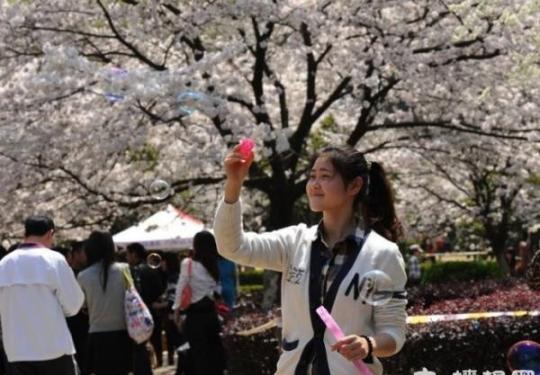 今年武大樱花节免费 需提前预约