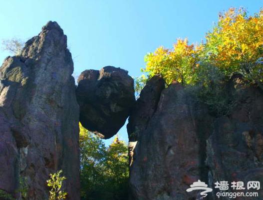 周末去哪玩?到北京森林公园感受最美春季[墙根网]