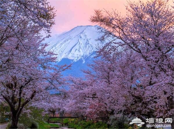 樱花怎么拍摄才更美?樱花拍摄技巧[墙根网]
