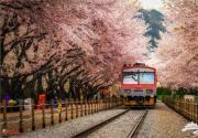樱花怎么拍摄才更美?樱花拍摄技巧