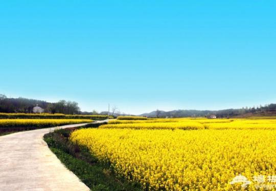 2019远安油菜花节
