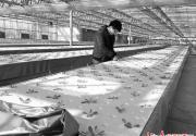2016北京农业嘉年华12日开幕 地下车库也能种出新鲜蔬菜