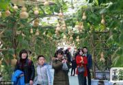 2016第四届北京农业嘉年华昌平开园