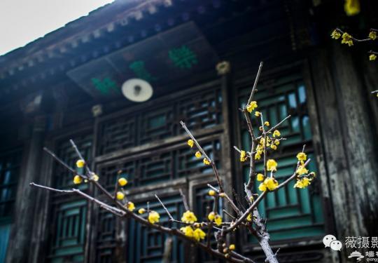 花开时节,不负京城好春光|京城赏花攻略