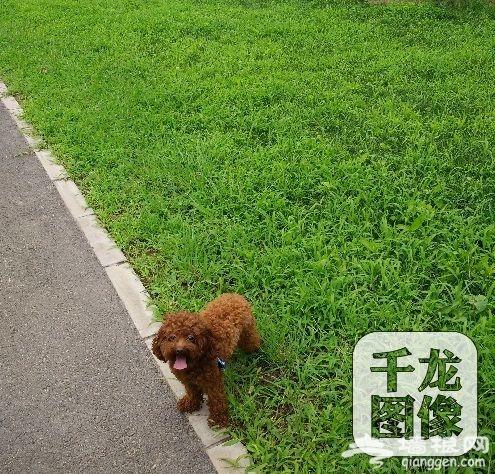 带着狗狗去旅行 北京这6个地儿必去[墙根网]