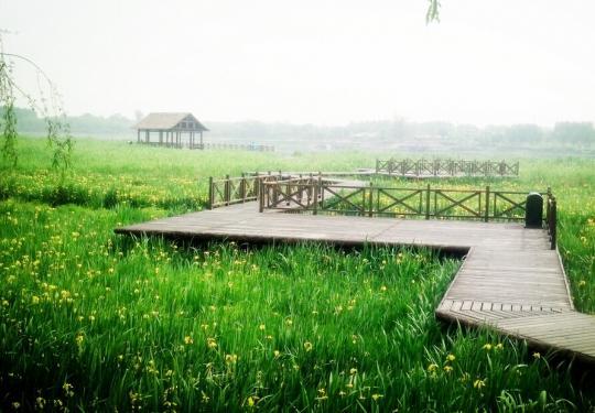 阳春三月踏青忙 北京你最想去的踏青地儿在哪?