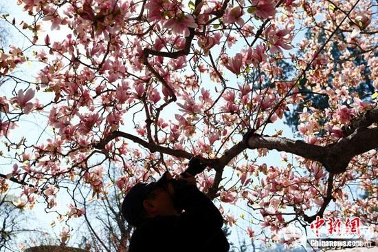 清明假期五大春花齐开放 切记文明赏花莫践踏