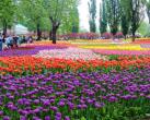 春游不想走远?北京市内公园走起!