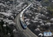 开往春天的列车 和谐号穿越居庸关花海
