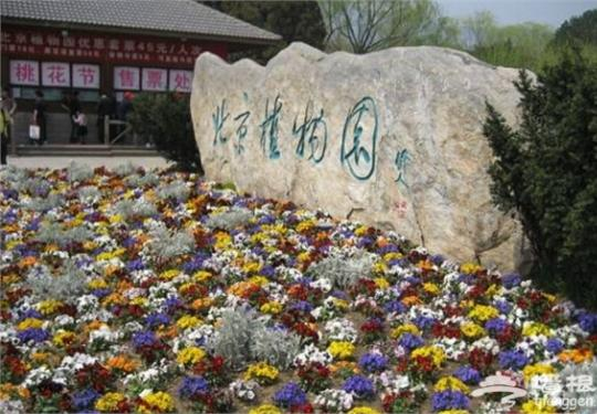 北京植物园桃花节六大赏花线路攻略
