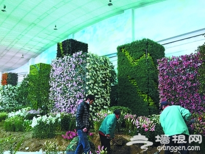 """今天,工作人员正在为""""郁金香文化节""""布置百合展厅。"""