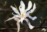 """2016上海植物园国际花展 看""""猴面兰""""去啊"""