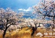 2016平谷桃花节开幕 史上最长桃花节可乘飞机平谷赏花