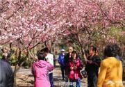 昨天7万人畅游北京植物园