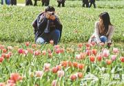 北京国际鲜花港郁金香文化节正式开幕