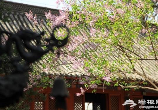 北京红螺寺五一节赏花游玩指南 满寺花香等你来