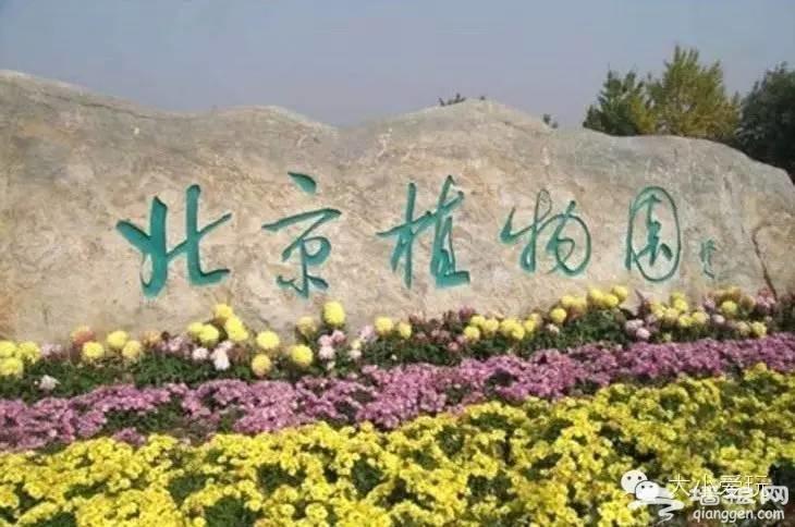 北京周边11处赏杜鹃的好去处[墙根网]