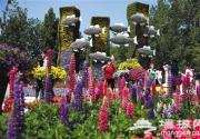 香山等公园仍可看春花烂漫