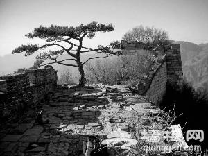 """长城""""迎客松""""枯死失踪 常有游客不文明爬树"""