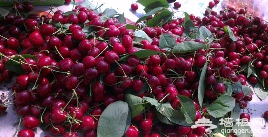 北京周边樱桃采摘去哪 北京周边最好的12个樱桃采园