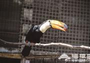去天津动物园 看世界嘴巴最大的鸟
