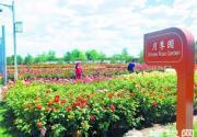 北京园博园 百种月季 连成花海