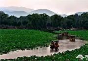 北京最美最全賞荷地圖