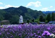 京郊游好去处——人间花海6.18开园啦