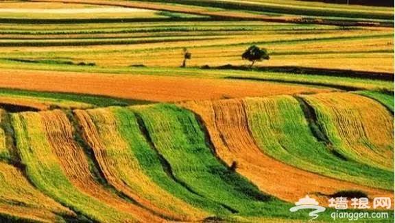 张承高速 又一条美丽的草原天路[墙根网]