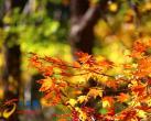 最美秋天里北京不可错过的风景
