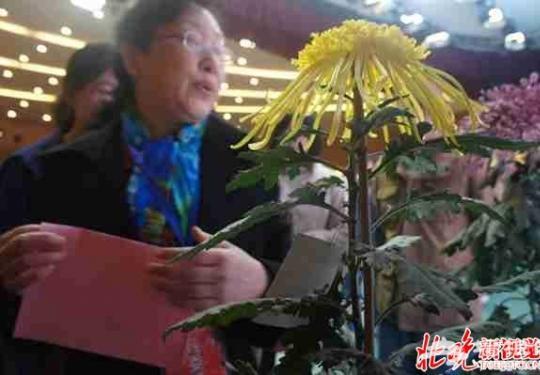 2016北京菊花文化节昨开幕 七大展区各具特色