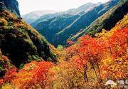 京郊秋季红叶旅游景点 只等时机一到就出发