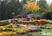 北京植物園菊花文化節 50萬鮮花匯聚一堂