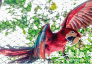 """十一""""到天津动物园看珍禽 首次引进18只金刚鹦鹉"""