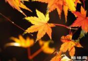 秋季枫叶摄影指南 枫叶怎么拍