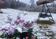 北京延庆迎今年首场降雪
