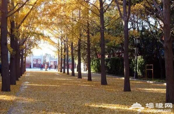 北京的秋天有什么 除了红叶还有这些美景[墙根网]
