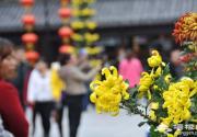 2016开封第34届菊花文化节 清明上河园 恰逢菊花香满园