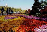 北海公园第三十七届菊花展在阐福寺举办